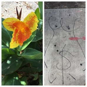 Just a beautiful flower on the sidewalk. Just a women's monetized privates on the sidewalk. #thebestandtheworst